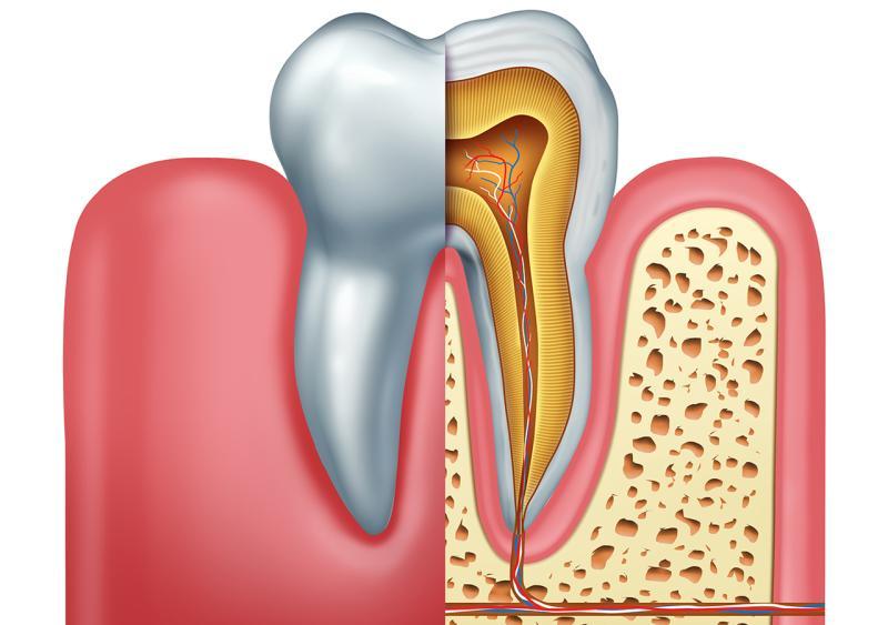 Zahn-mit-Nerv